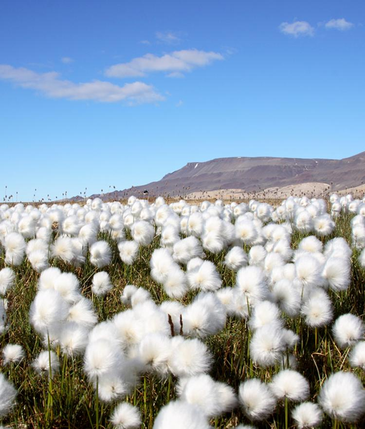 The Difference Between Organic Cotton Farming and Conventional Cotton Farming