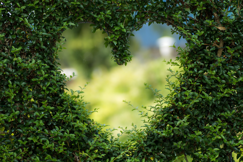 Leaves in heart shape